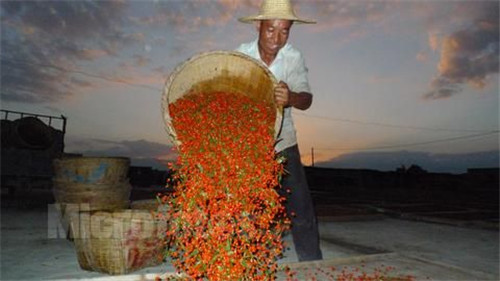 Ningxia High Quality  Dried Goji Berry