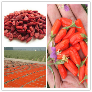 Goji Berries 400grains/50g